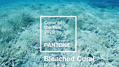 رنگ سال 2020 توسط کمپانی پنتون مشخص شد